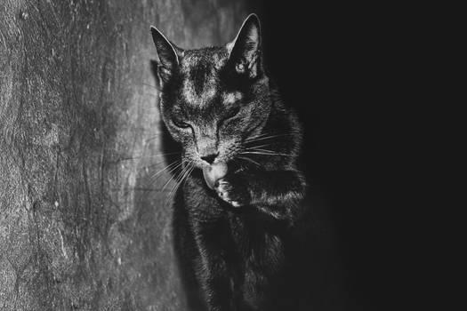 Meet Salem.