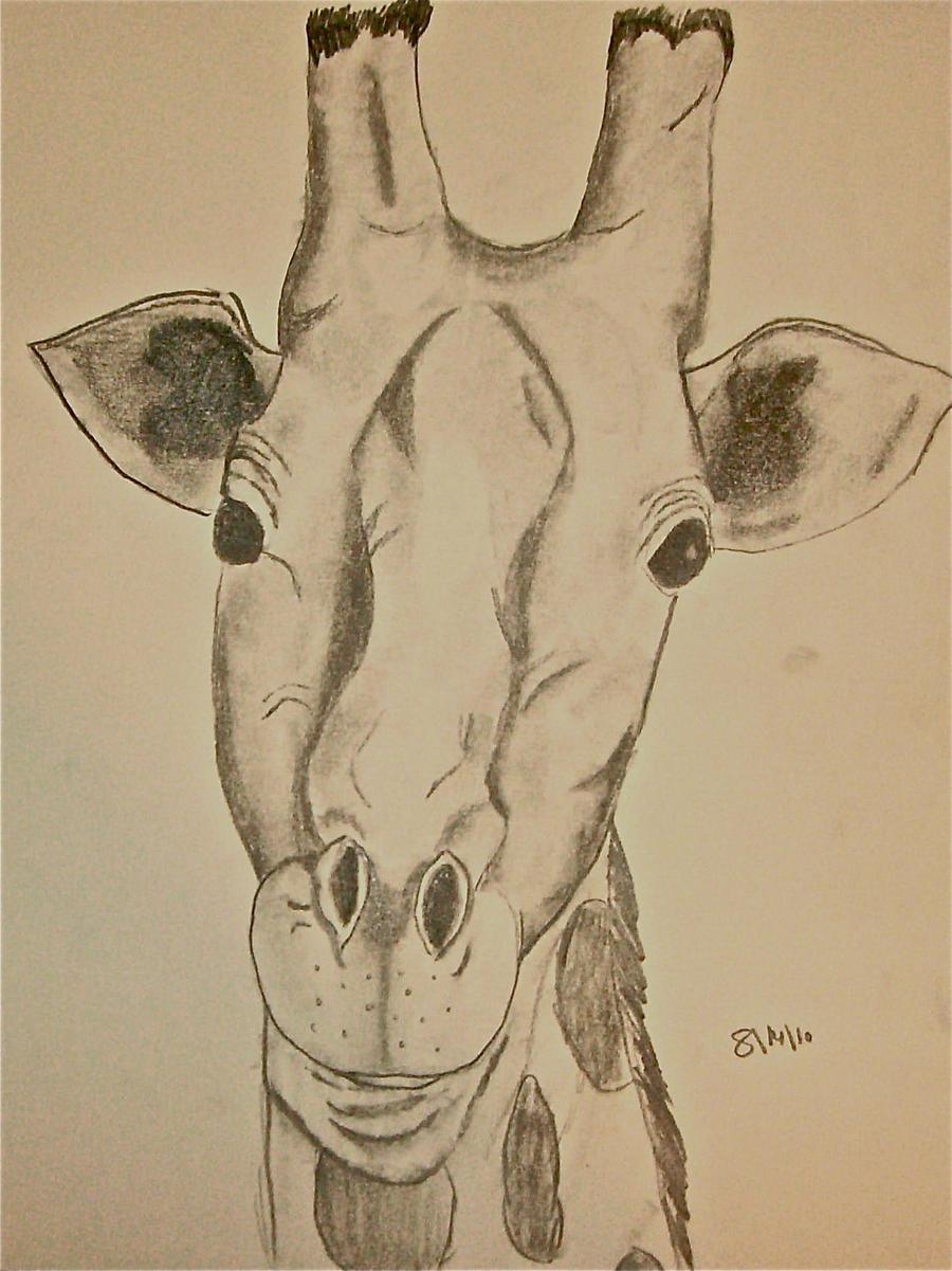 Giraffe Head by greenstables on DeviantArt