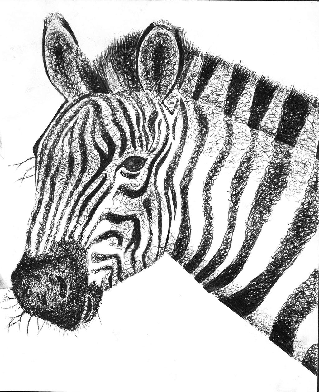 Line Drawing Zebra : Zebra drawing by leanneart on deviantart