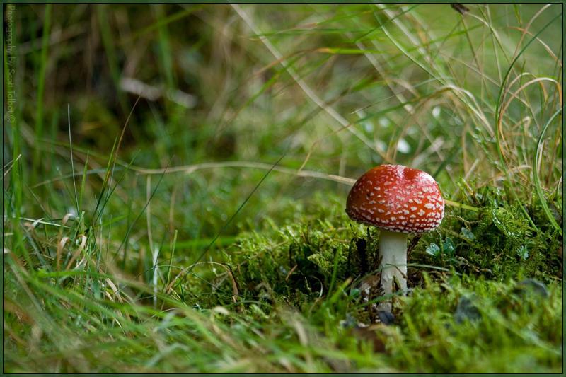 Fungus 2 by DaBeanz