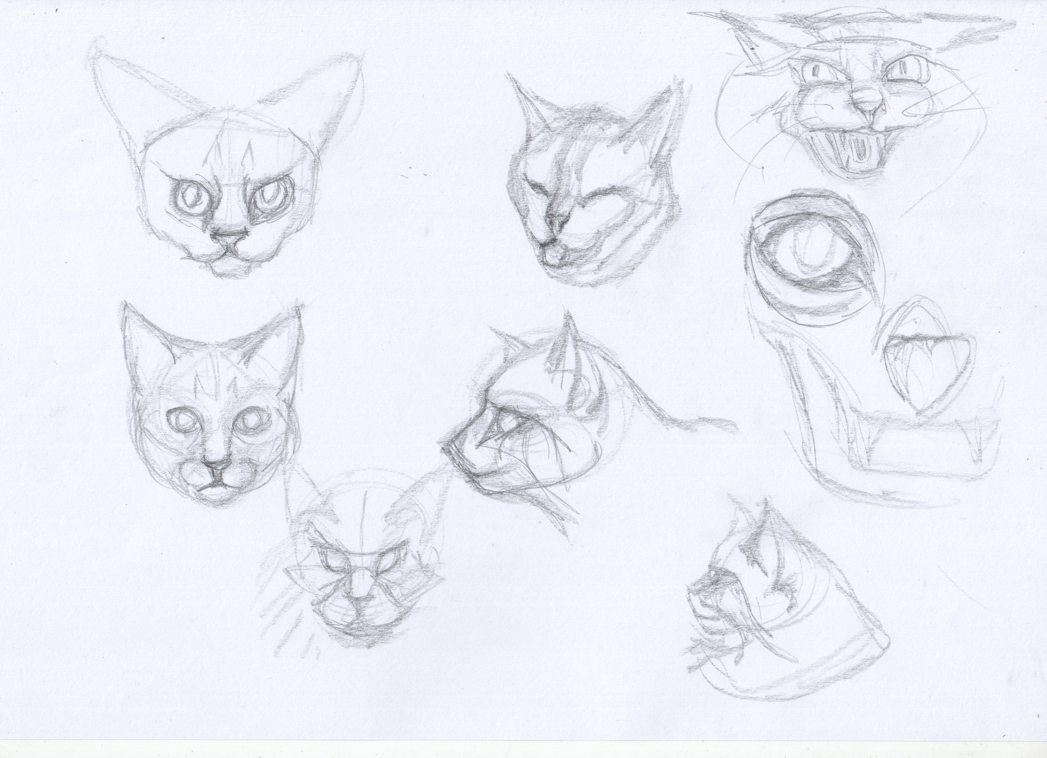 [Image: cat_lesson3_1_by_punk_a_cat-d9262ys.jpg]