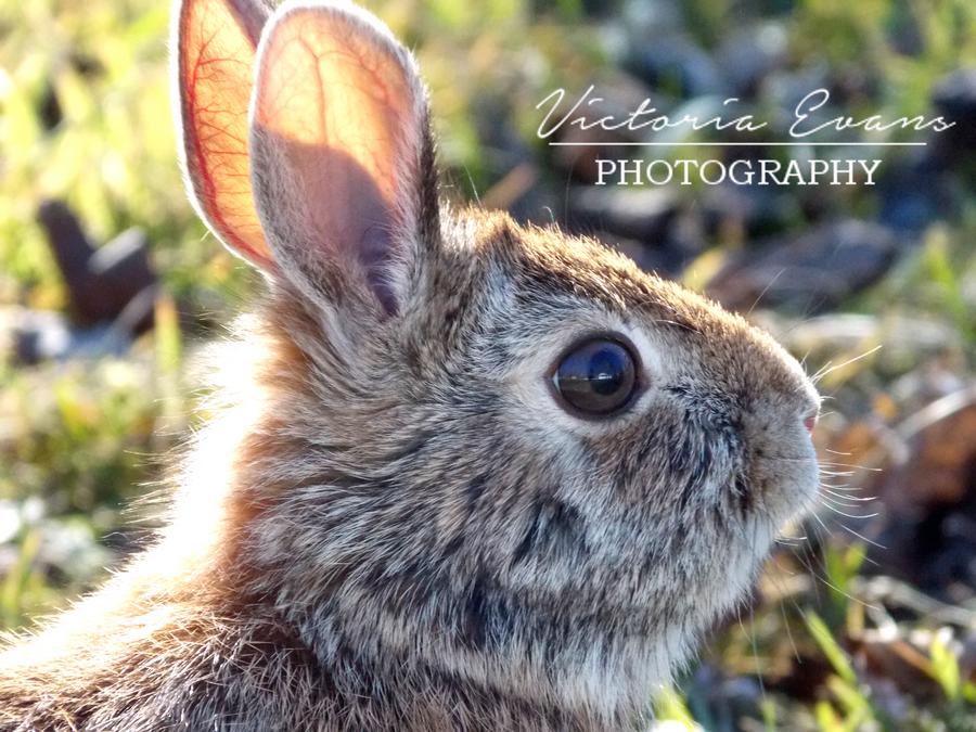 Wild Bunny! by vicky271