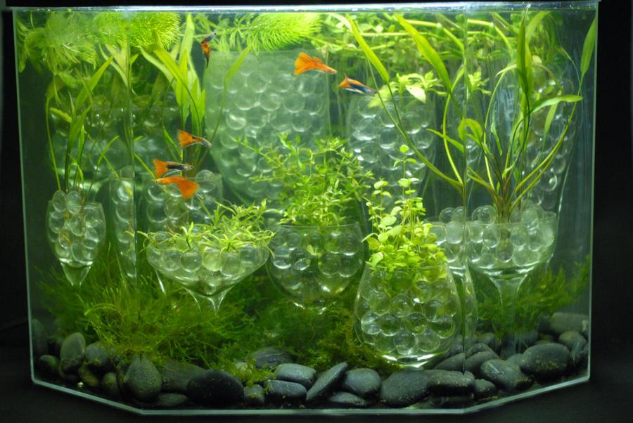 Black on aquarium plants list of aquarium plants 2017 for Fish tank with plants on top