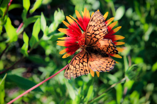 Wildflower and Wings