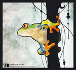 red eyed tree frog, just frog