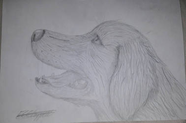 Golden Retriever - Traditional - Realistic by Darth-Emily