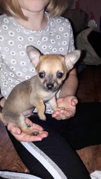 Oscar Pickle at 7 weeks old.