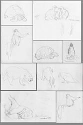 -Zoology-