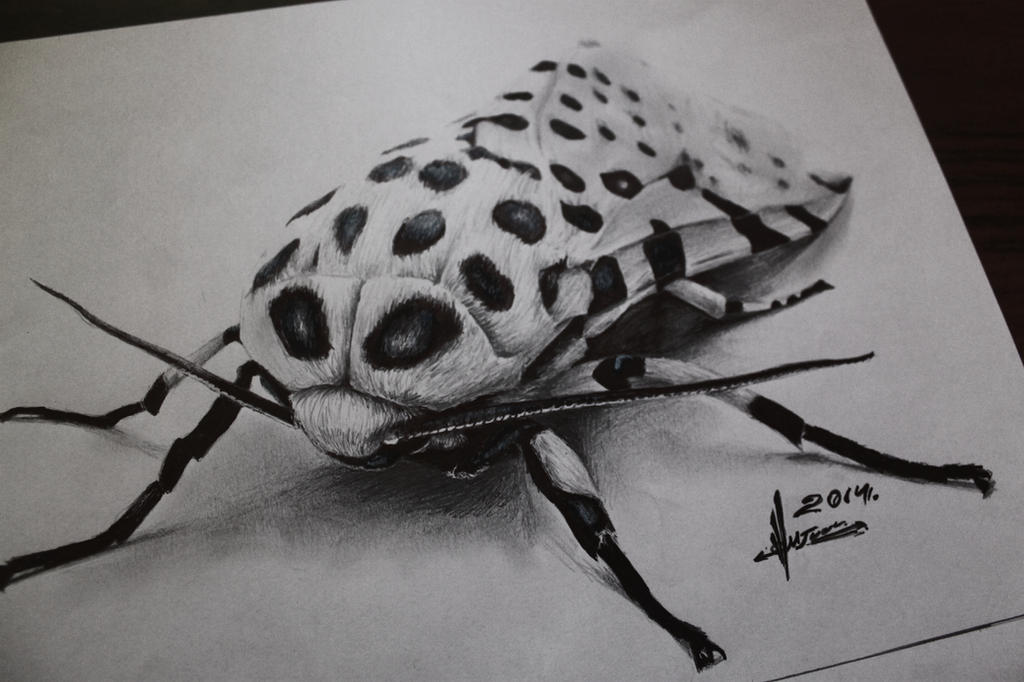 3d insect drawing by TolleaM