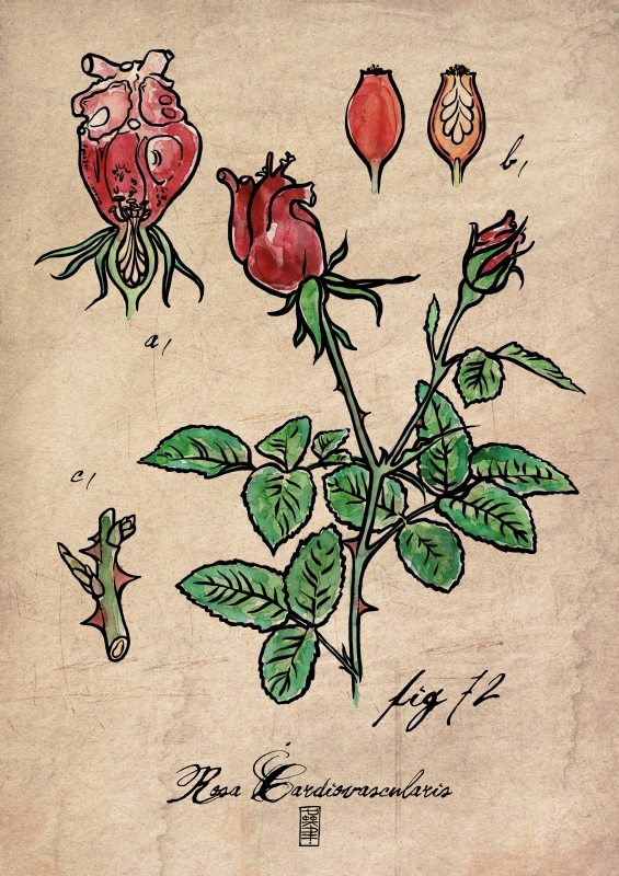 Botanical Hearts: Rosa Cardiovascularis by moon-pookah