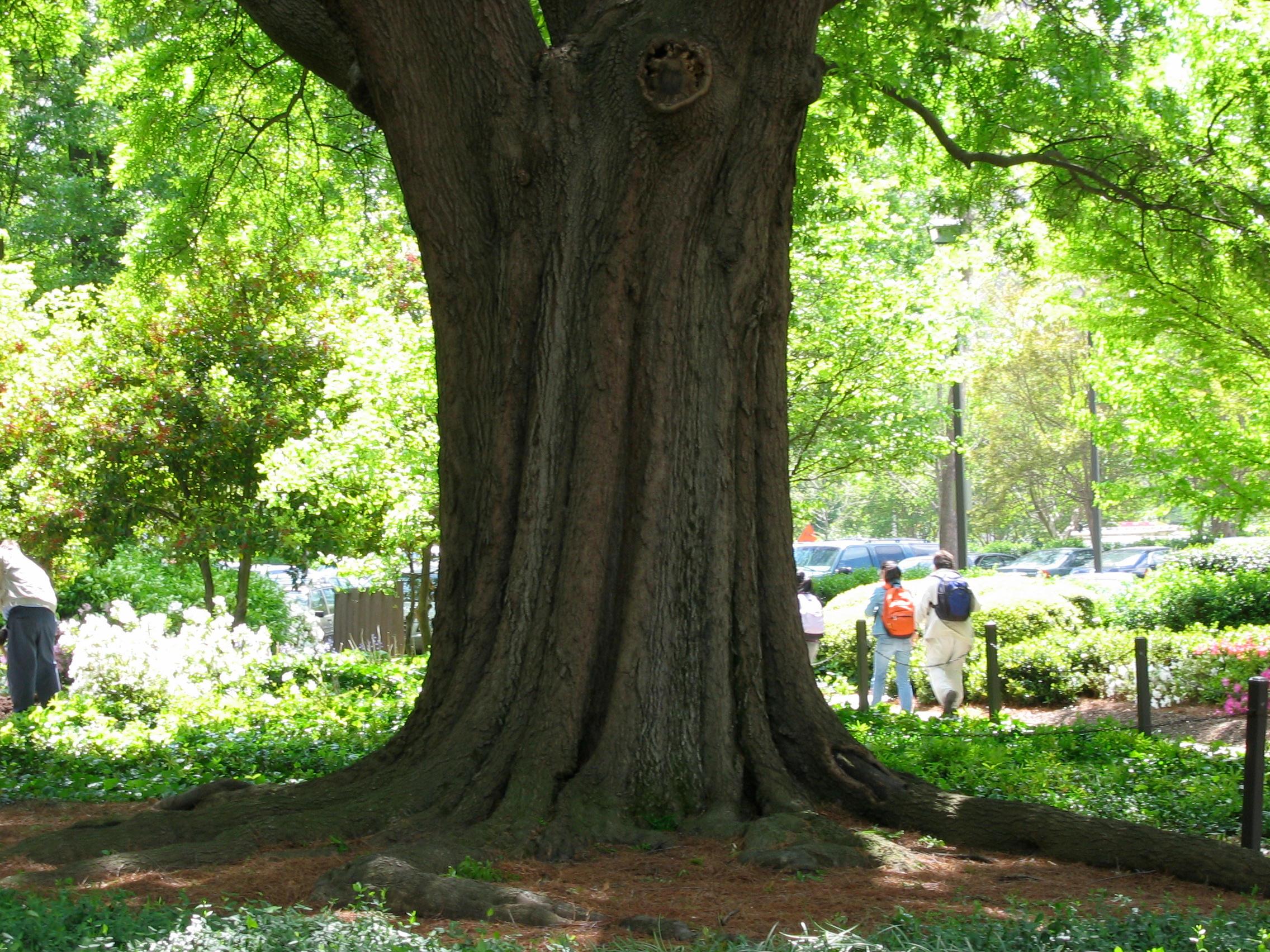 <b>Tree trunk</b>