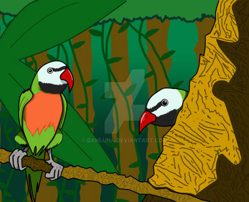 Red Breasted Parakeets