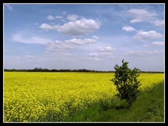 Yellow sea by DrDra