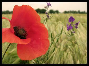 Poppy by DrDra