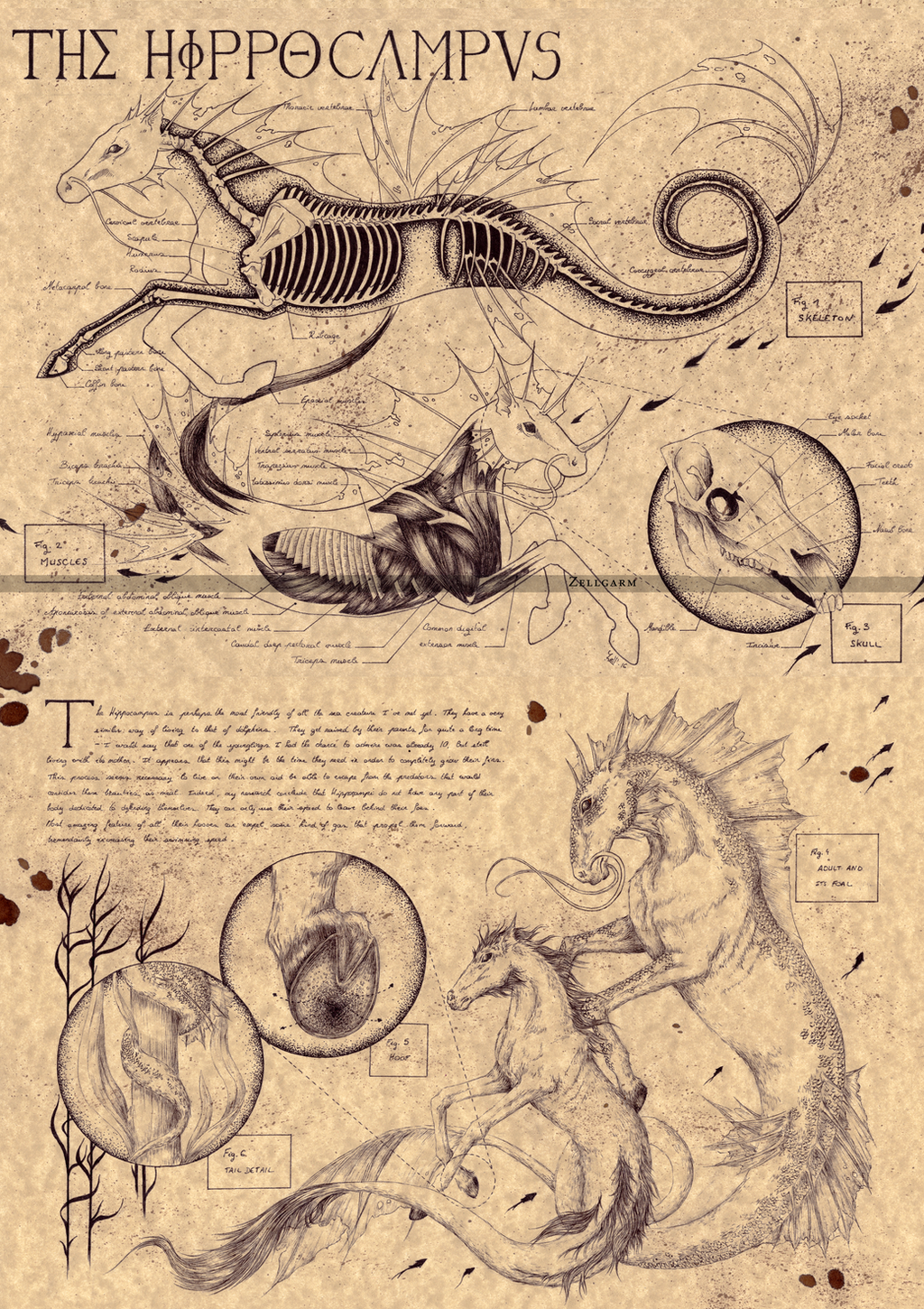 THE HIPPOCAMPUS by Zellgarm