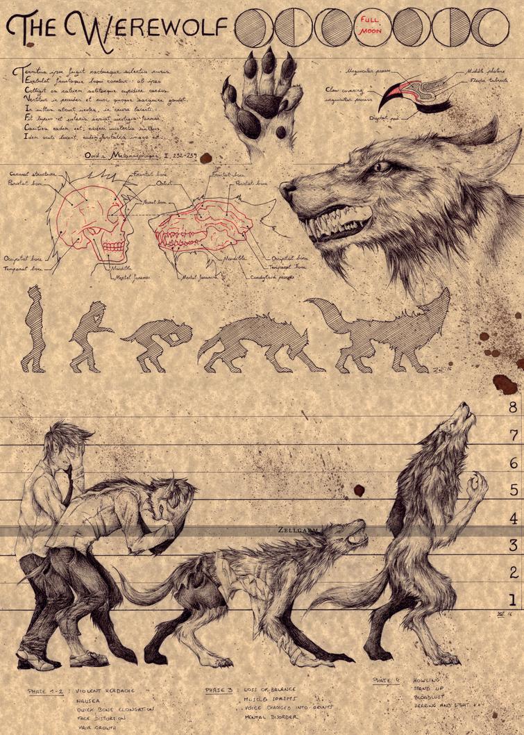 THE WEREWOLF by Zellgarm