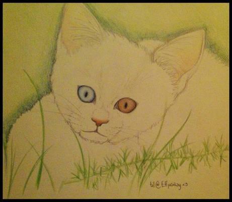 SiriSvarta - a pharao Cat