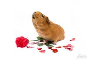 Happy Valentine's Day. by ApopFrauks
