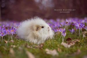 Spring is finally here! by ApopFrauks