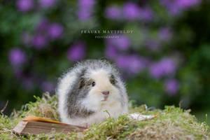 Little fluffy Grisu. by ApopFrauks