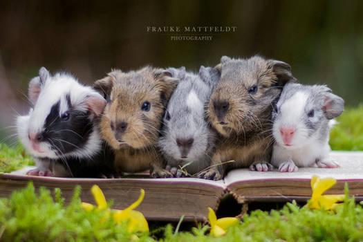 Five little baby piggies.