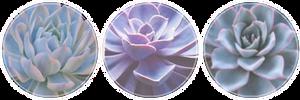 Blue/Purple Succulent Divider | f2u by pnutpals