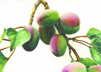 Unripe Apricot by darkartificer