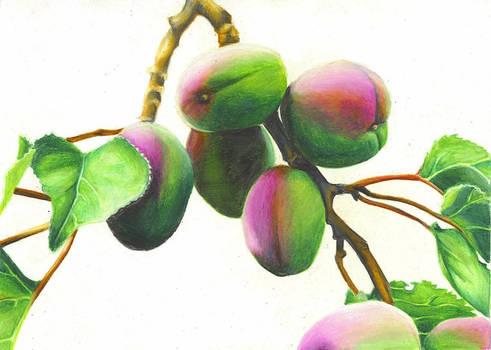 Unripe Apricot