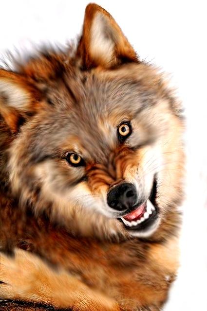 wolf by Talitah