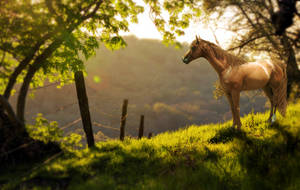 The Grass Is Always Greener by aphrodite-designs