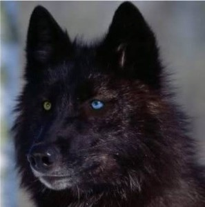 SenpaiTansyWolf's Profile Picture