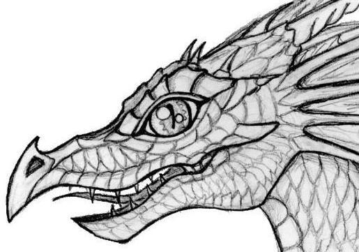 Baby Dragon head by Abydell on DeviantArt