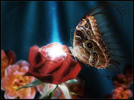 Butterfly on rose by HorizoNpl
