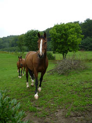 Animals - Horses 04 by Stock-gallery