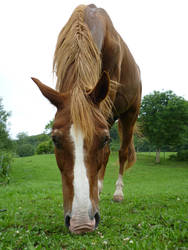 Animals - Horses 06 by Stock-gallery