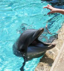 Doplfin feeding