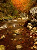 Wilderness by Neitheea