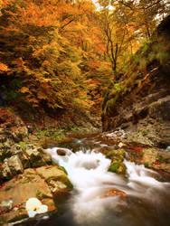 Wilderness2 by Neitheea