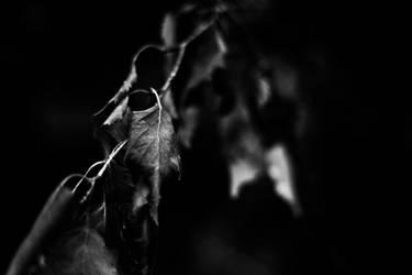 Dying Away by Atinaj