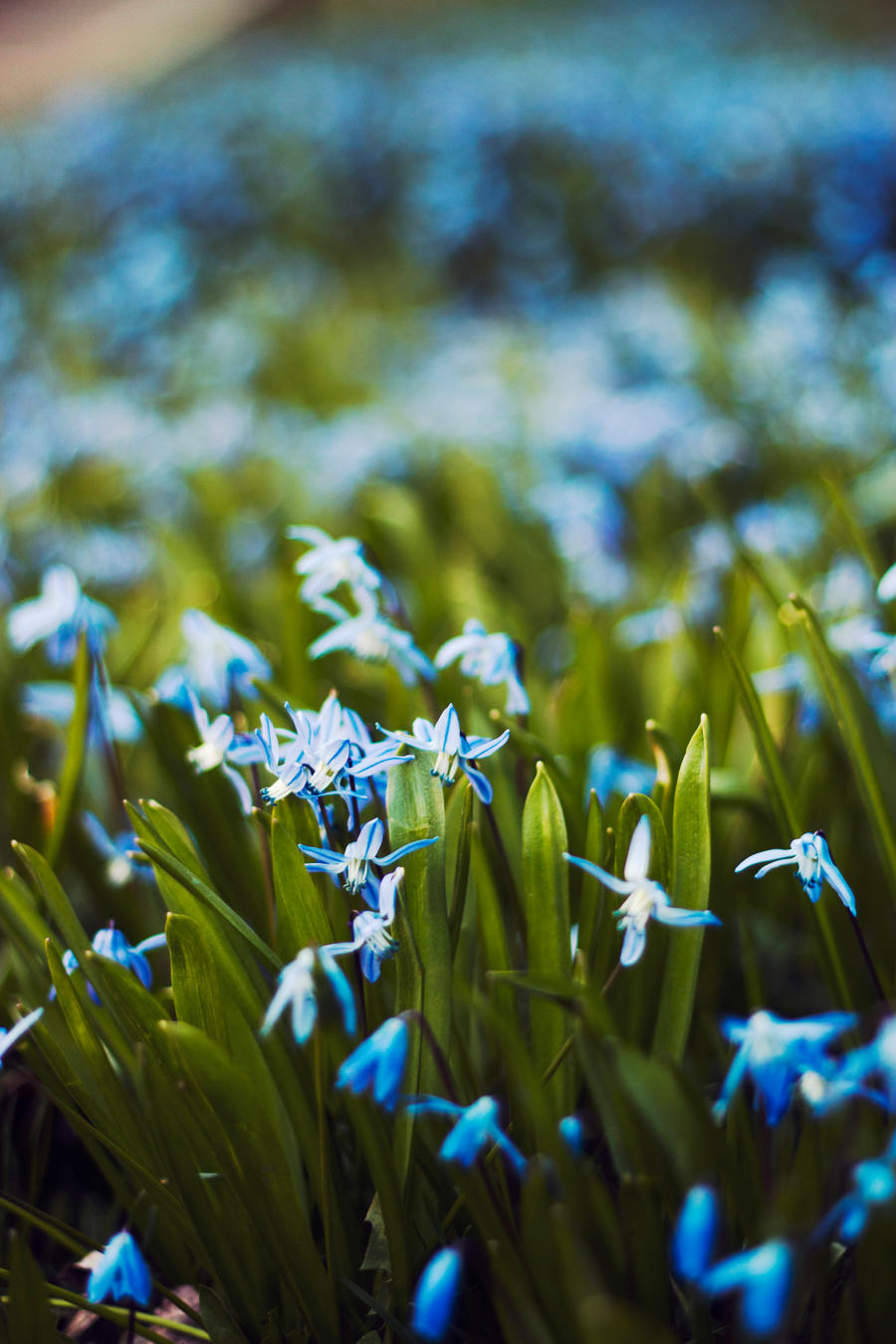 Blue Flowers by Atinaj