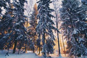 through the snowy trees by Atinaj