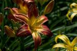 Botanical - 2