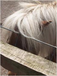 Miniture Pony by DigitalHowl