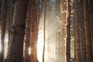 Dawn by RoB-FranKsDad