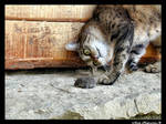 Cat and Mouse by Morpher-inc