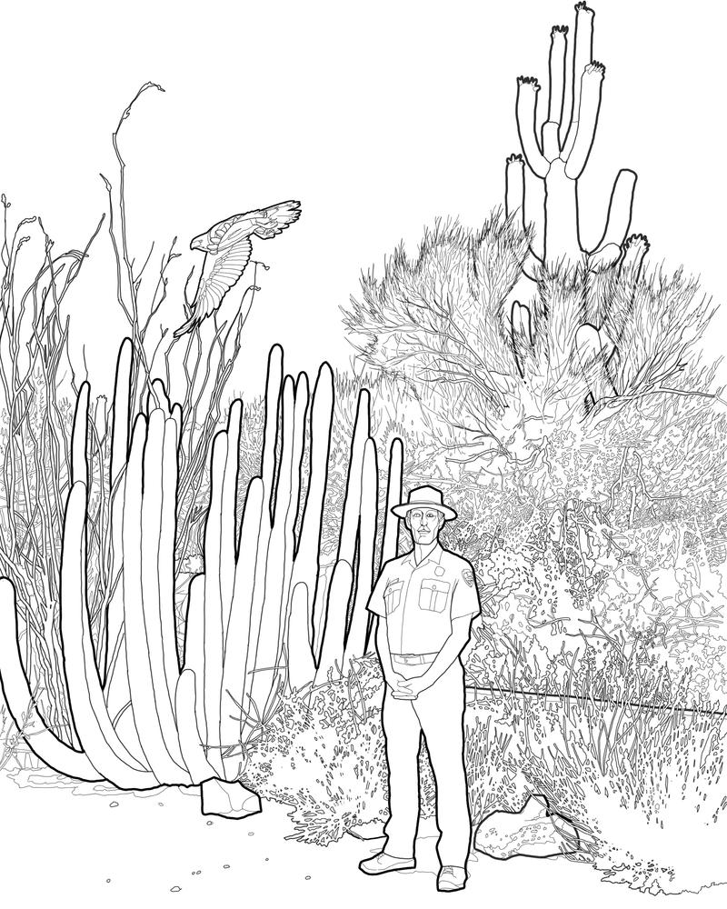 ocotillo coloring page coloring pages