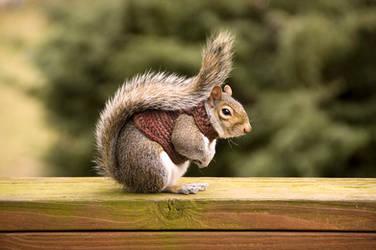 Squirrel in Sweater Part Trois by woobiee