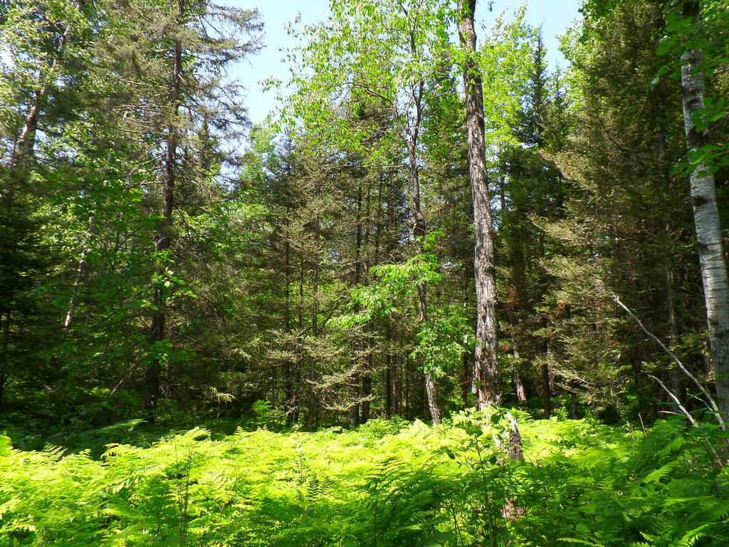 woodland backyard 2 by yackemflaber on deviantart
