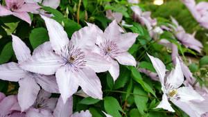 Spring Flowers 02