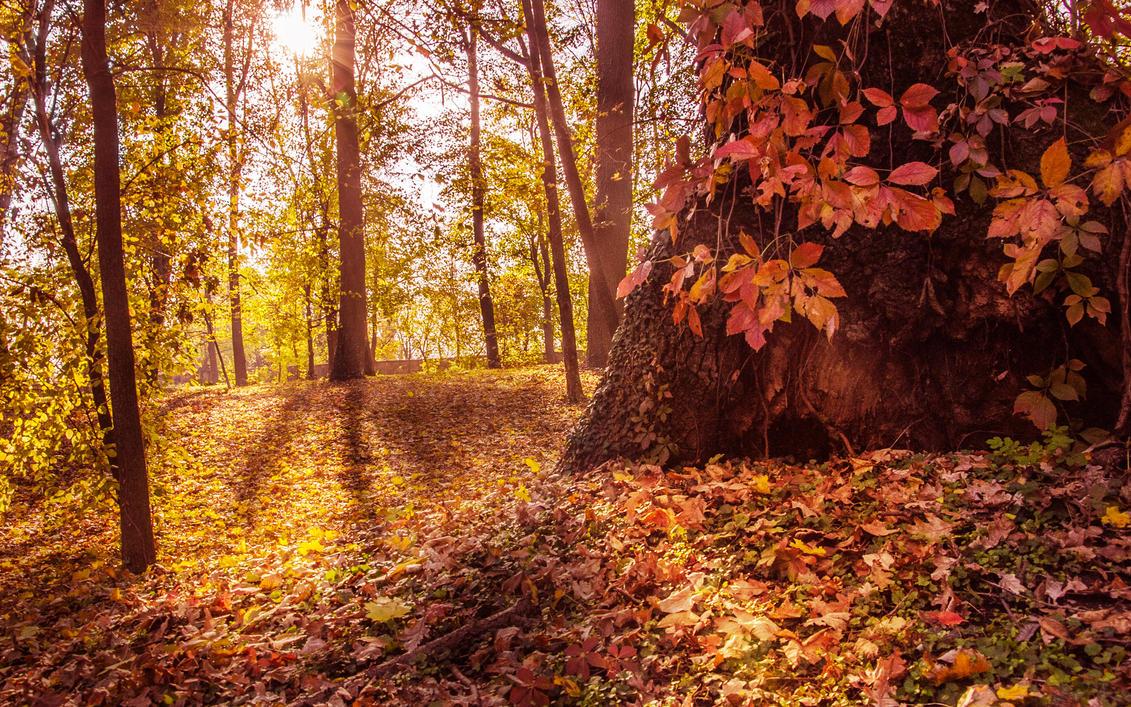 Autumn sun by haxxy
